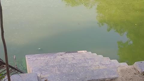 Bangladeshi village pond video