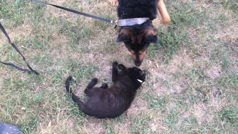 Little Cat Wants To Be Besties With A BIG Dog