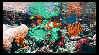 Breathtaking Marine Life