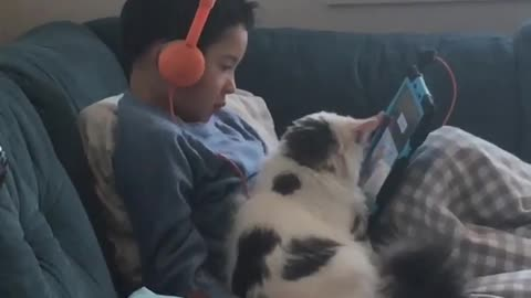 Cat and boy watches cartoon