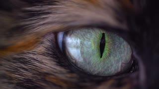 Cat eyes intro
