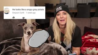 Reading mean comments about dogs