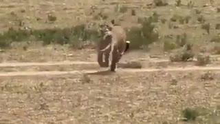 Very funny animal video