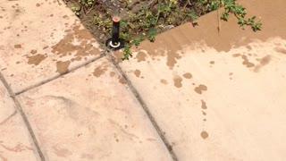 My Dog hates the yard sprinklers