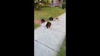 Cat Pack Unfriendly Towards Pooch