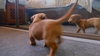 Dogs dancing, playing, walking like a human being.. FUNNY DOG'S COMPILATION