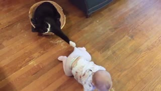 Funny video of a cat playing with the child