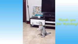 Cat Smashes Helicopter