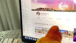 Parrot Hates Laptop