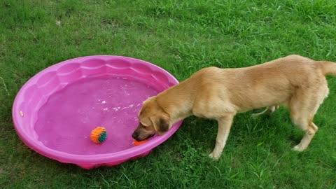 Doggo at the pool