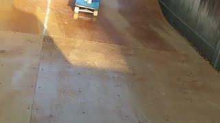 Intelligent Cat skate boarding