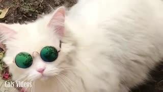 Cute Cat Wears Great Glasses