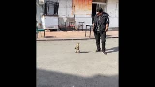Funniest Animals #