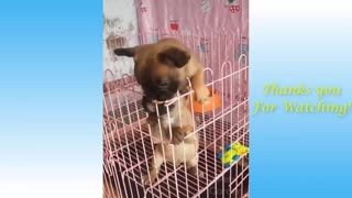 Funny video with cute pets
