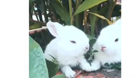 Rabbits 🐇 eating peacefully 😁 beautiful scene smiles