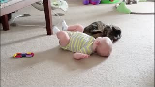 Baby Cat Fun video