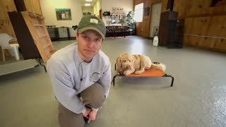 The Biggest Overlooked Dog Training Command!