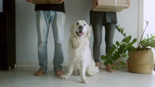 White Dog with People Holding Boxes