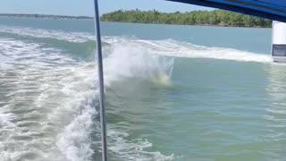 Dolphins Having Fun Doing Flips