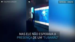 Homem leva susto com 'tubarão' em museu