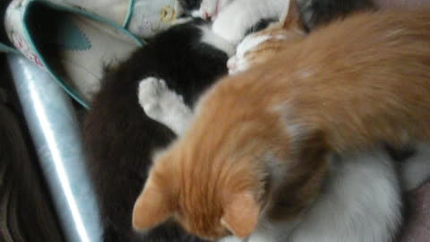 The kittens are sleeping.