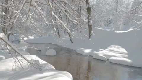 Snowy forest with a brook running in it