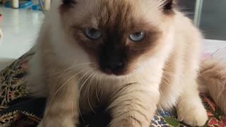 Cat Massage Belly: I got my morning massage