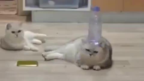 cats i gatti