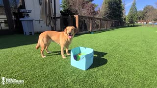 Service dog opens box of balls, only plays fetch with specific one
