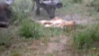 Animal fight attack danger