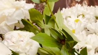 Natural flowers | Short video