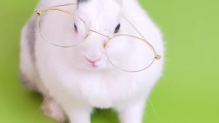 Rabbit reads a book