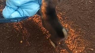 Puppy Lulls Baby in Hammock to Sleep