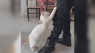 Funny cat lovely cat 🤓