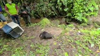 Liberan más de 200 animales silvestres, recuperados en Bucaramanga y el área 3