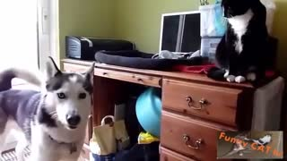 First time Cats and Dogs Meet