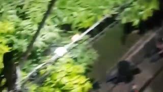 Video en el que apuñalan a un celador no es en Santander