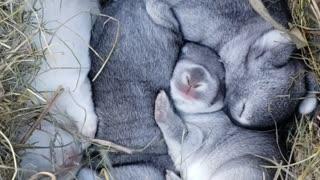 Baby Bunnies Sleeping