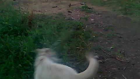 The dog Umka welcomes!