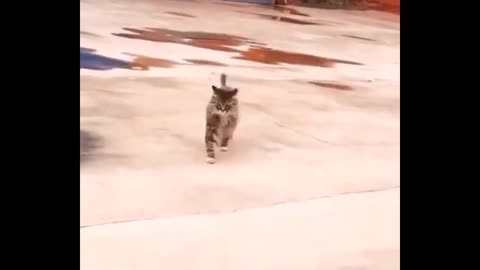 Daily cat video - 1