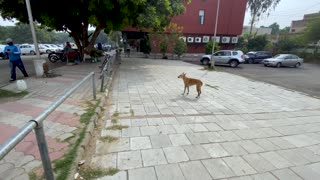 Dog Prank on the street with fake Tiger