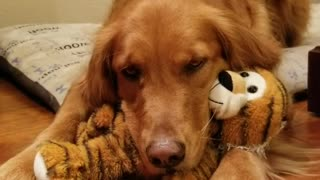 Sweet pup cuddles with her favorite stuffed animal