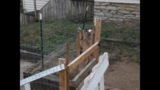 Dogs meets ground hog