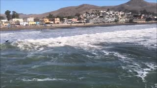 Cayucos Beach Surfing at the Pier