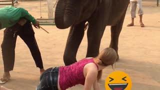 Elephant massage in Thailand ver 2