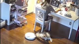 Dog Tail Vacuum Cleaner