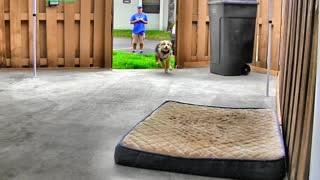 ONLINE Dog Training Secret! Step by Step !!!! Easy and Fast!