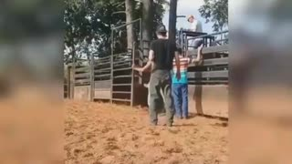O touro aí quando o cavalo zanga