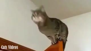 A cat jumping from The Top Door To Another Door.