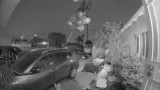 Rambunctious Kitty Releases Birthday Balloons